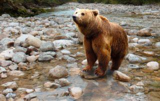 L'orso non è invitato. Come l'uomo distrugge la biodiversità