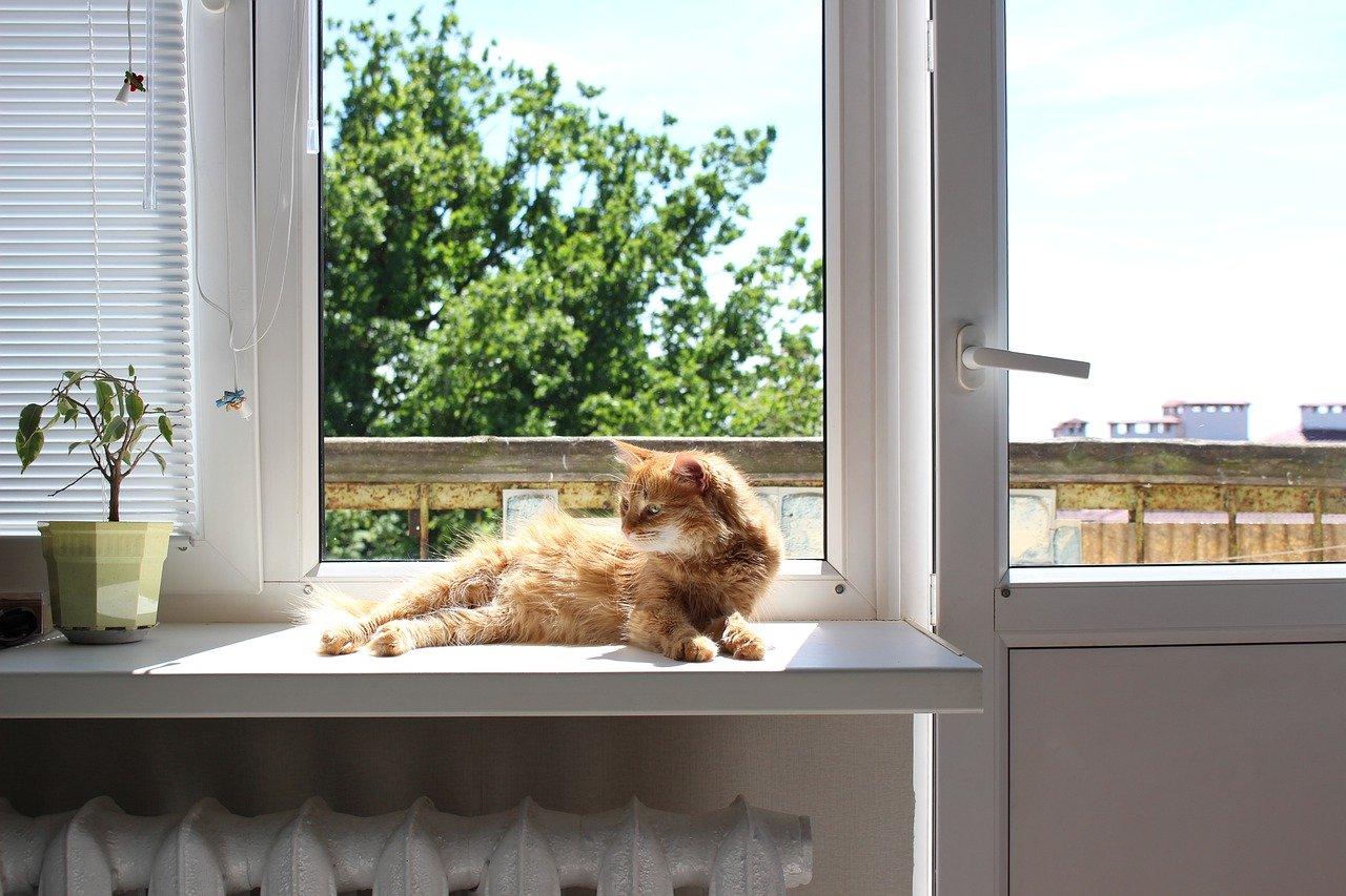 Come proteggere gli animali in estate da afa e caldo torrido