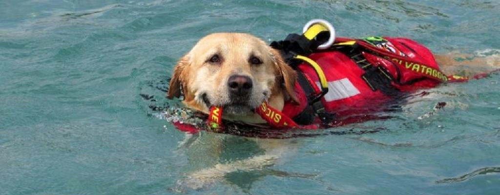 Cani da salvataggio, sono loro gli eroi delle nostre spiagge