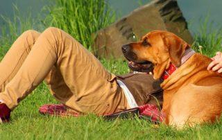 Estate pet friendly senza stress, ecco come con poche accortezze